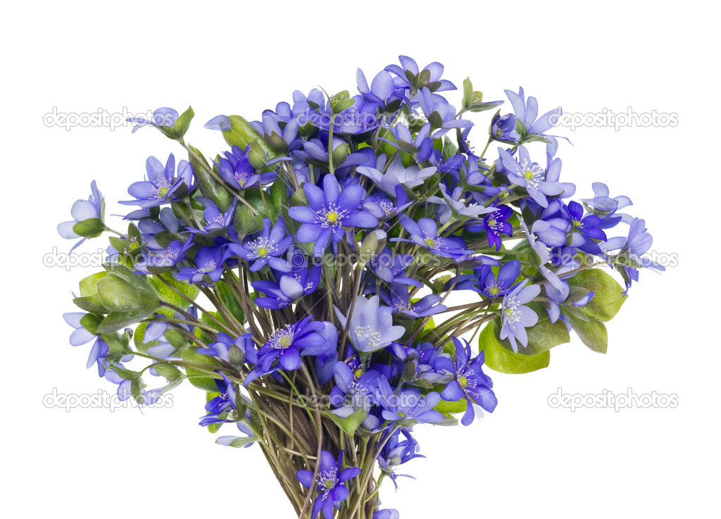 Bouquet from first springs flowers stock photo vilaxlt 10529638 bouquet from first springs flowers stock photo mightylinksfo