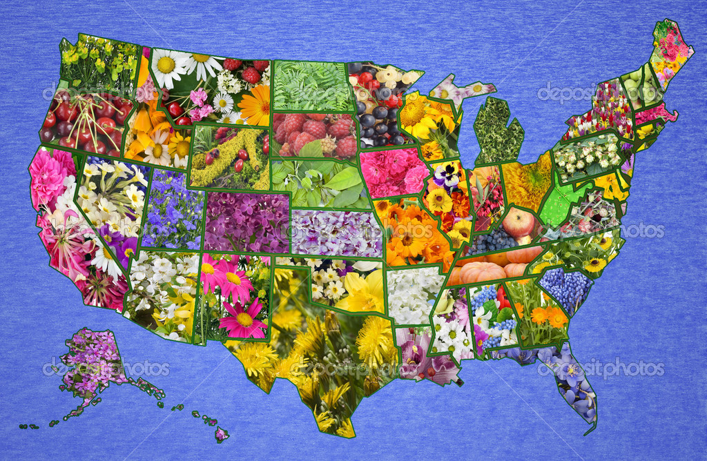 USA American Map From Flowers Stock Photo Vilaxlt - High resolution us map download