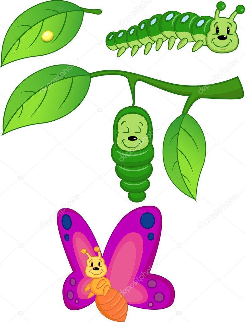Dibujos Para Colorear De La Metamorfosis De Una Mariposa