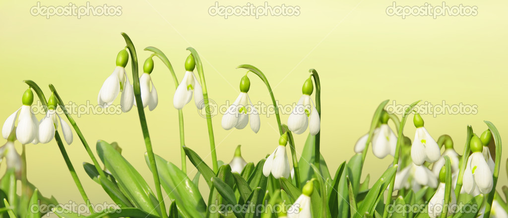 Spring Flowers Header Stock Photo C Mny Jhee 8540774