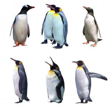Isolated gentoo and emperor penguins