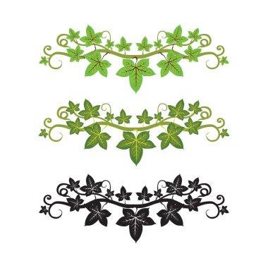 Illlusstration of ivy plant