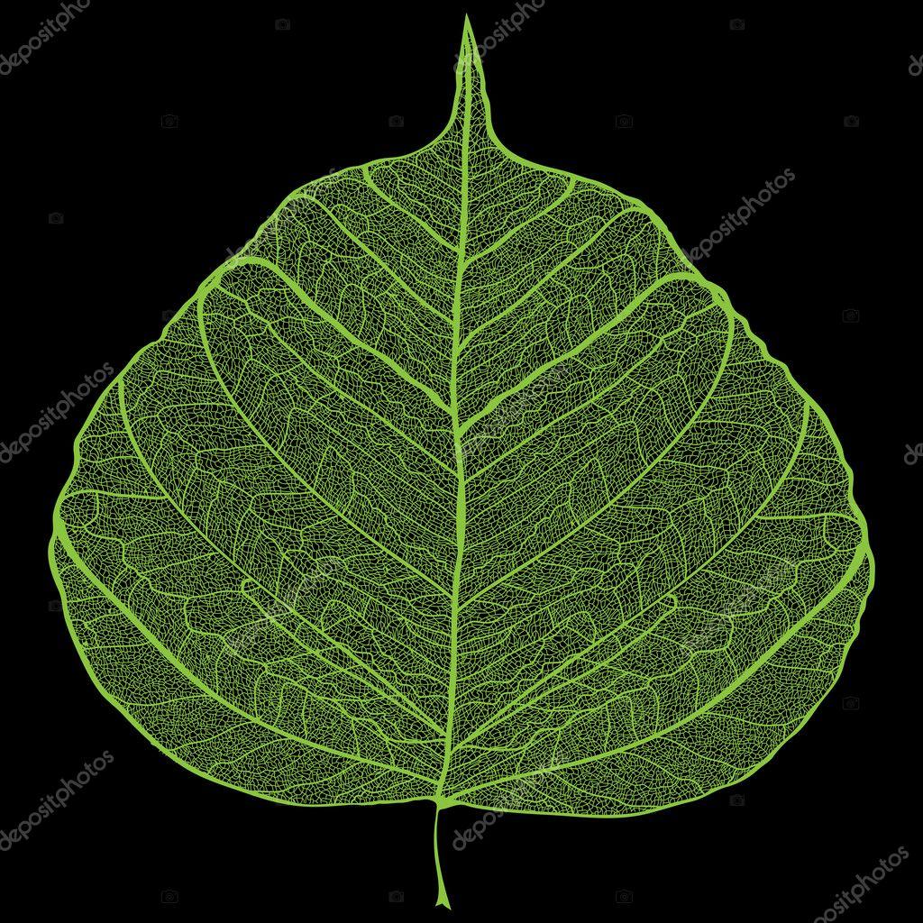 Green leaf skeleton