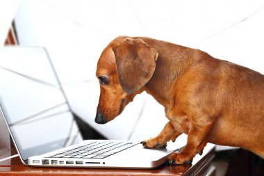 Dog using computer