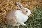 Fotografie králík