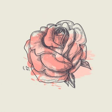 Artistic rose vector illustration