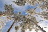 alberi d#39;inverno