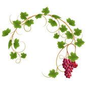 Fotografie Red vine