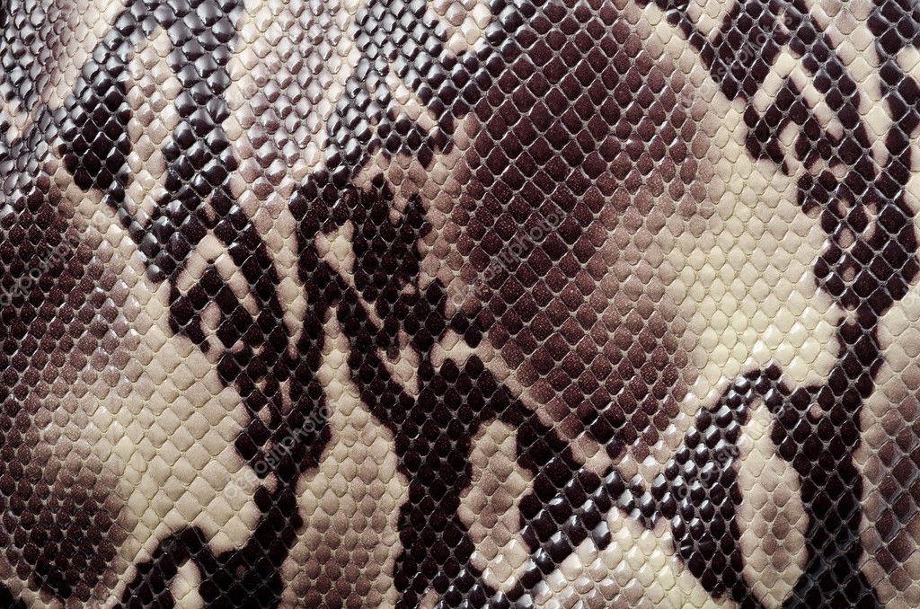 змея наклейка фон бесплатно