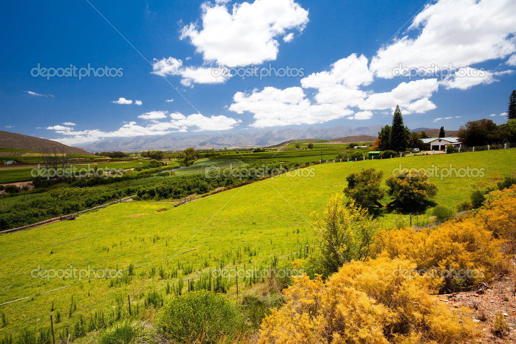 South africa winelands landscape