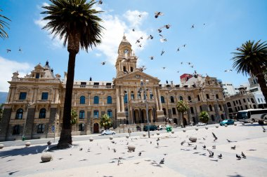 Pigeons flying over city hall of cape town