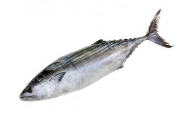 Tuna Fish Isolated