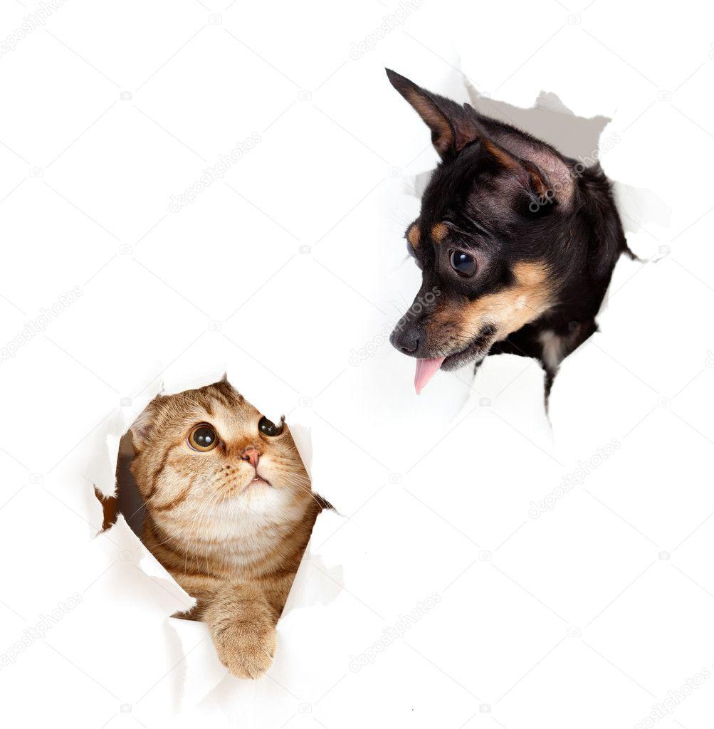 gato y perro en agujero rasgado de papel lateral aislado — Foto de ...