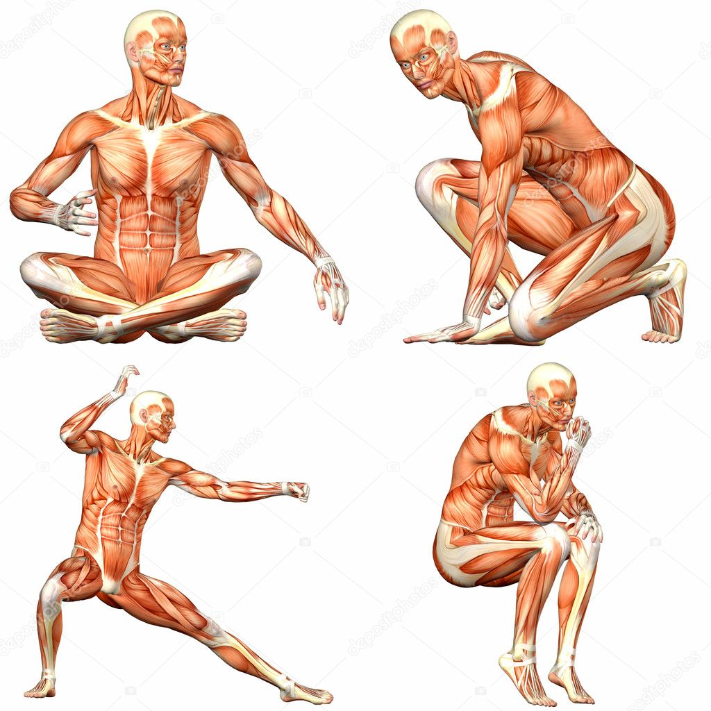 pack de anatomía cuerpo humano masculino - 3of3 — Fotos de Stock ...