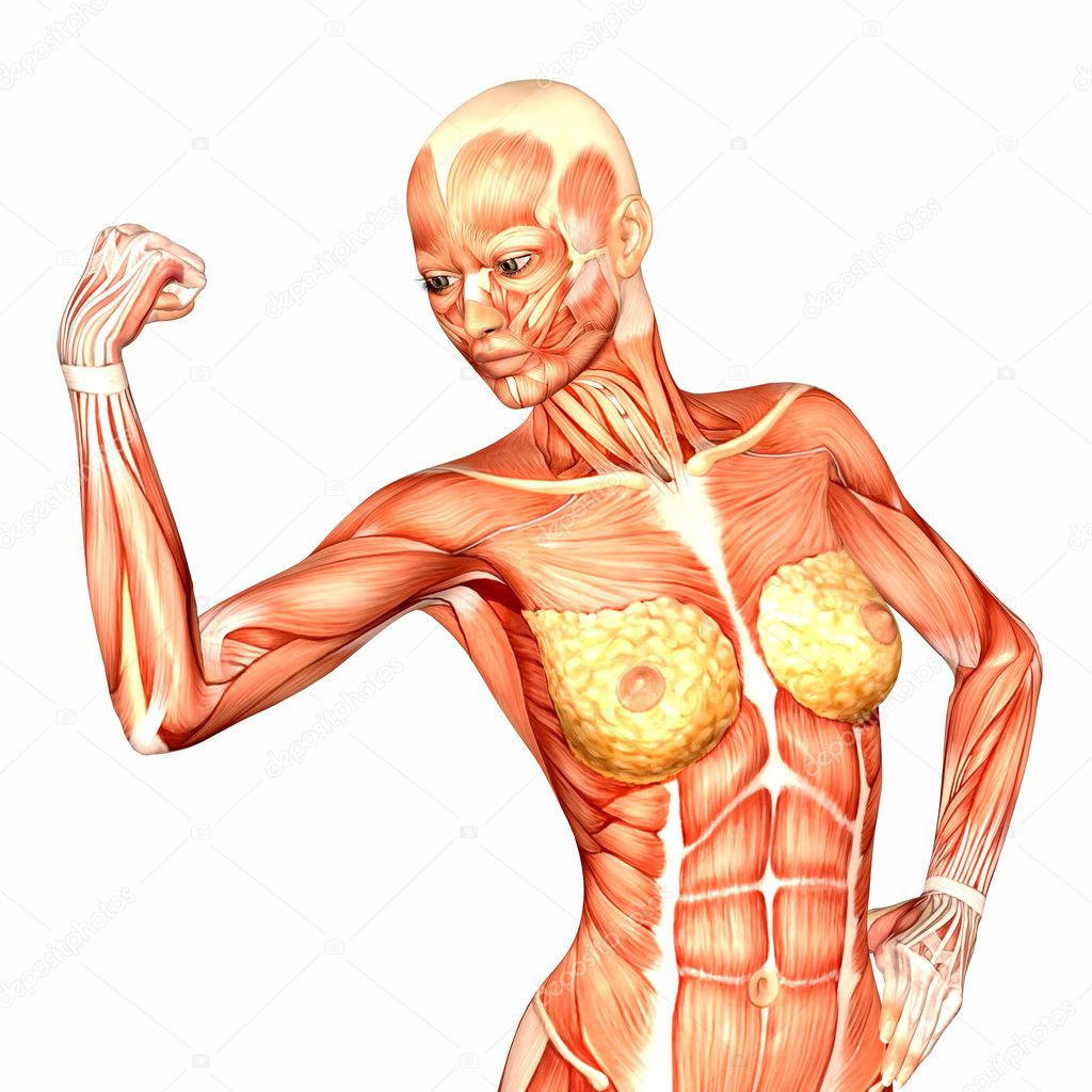Female Human Upper Body Anatomy Stock Photo Chastity 9162280