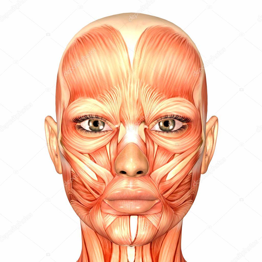 Menschliches Gesicht weibliche Anatomie — Stockfoto © Chastity #9162283