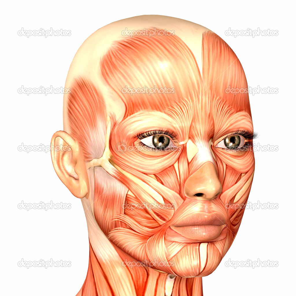 Female Human Face Anatomy — Stock Photo © Chastity #9162286