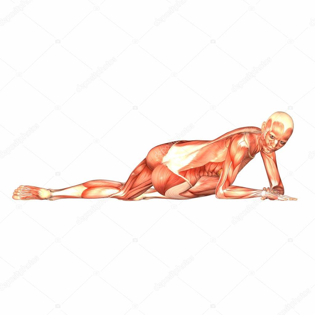 Anatomía del cuerpo humano femenino — Fotos de Stock © Chastity #9162293