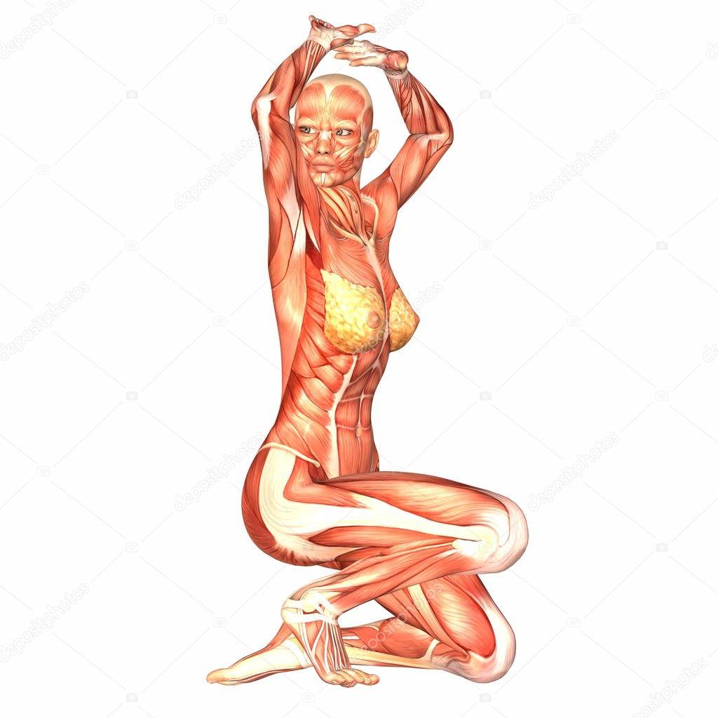weibliche menschliche Körper-Anatomie — Stockfoto © Chastity #9162302