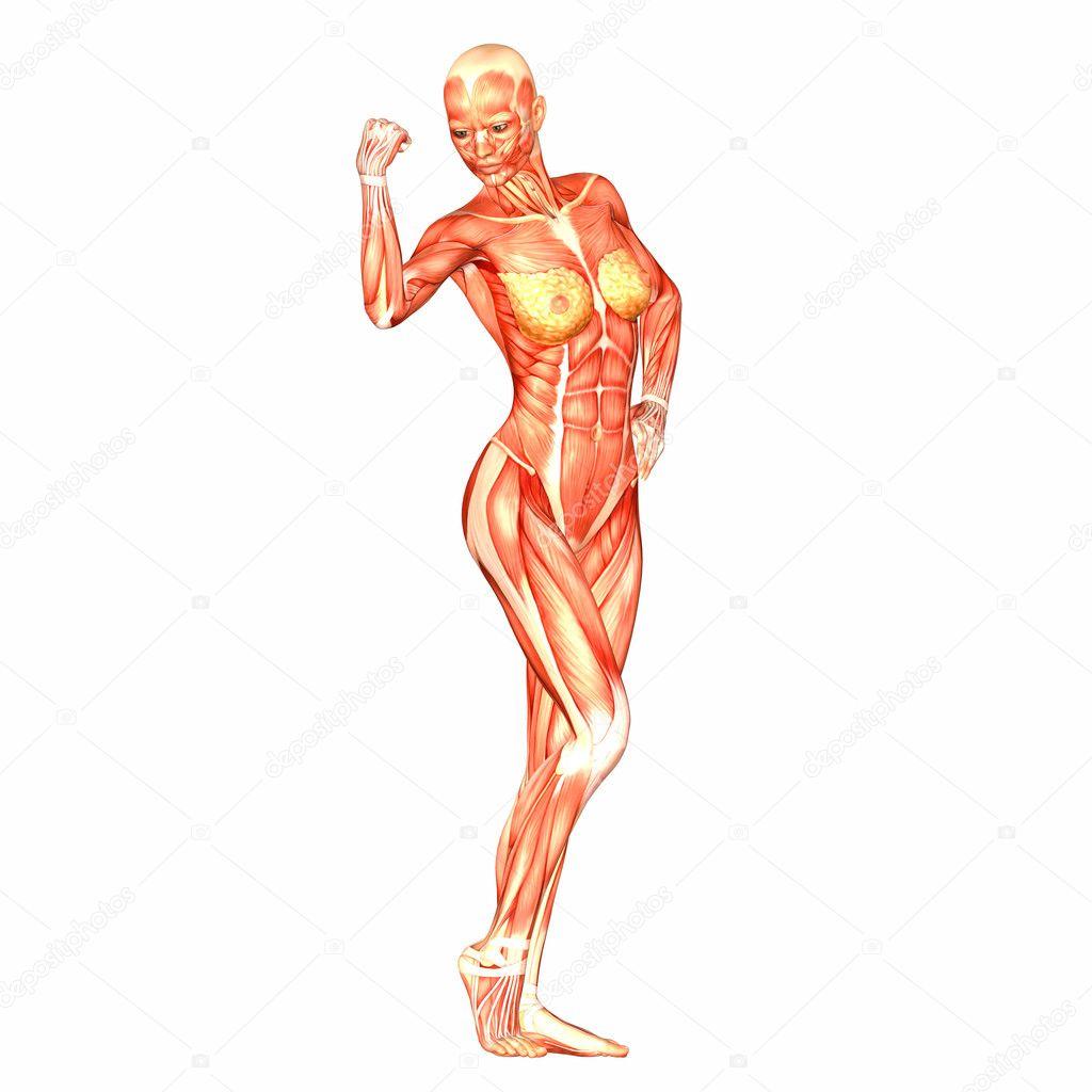 Anatomía del cuerpo humano femenino — Fotos de Stock © Chastity #9162307