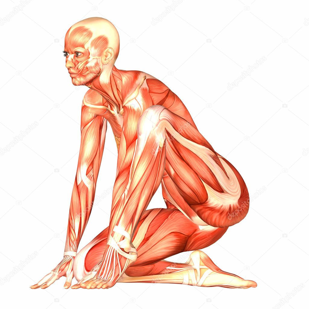 Anatomía del cuerpo humano femenino — Fotos de Stock © Chastity #9162311