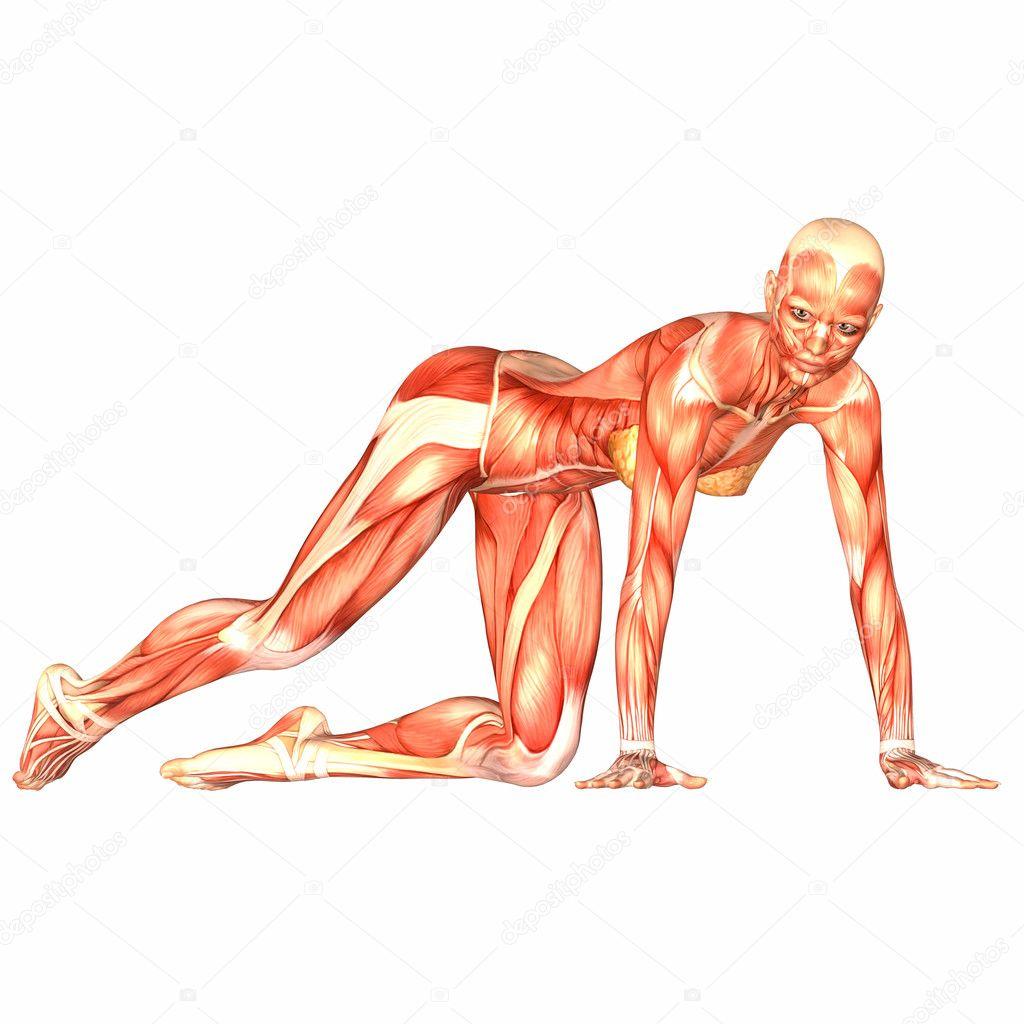 weibliche menschliche Körper-Anatomie — Stockfoto © Chastity #9162332