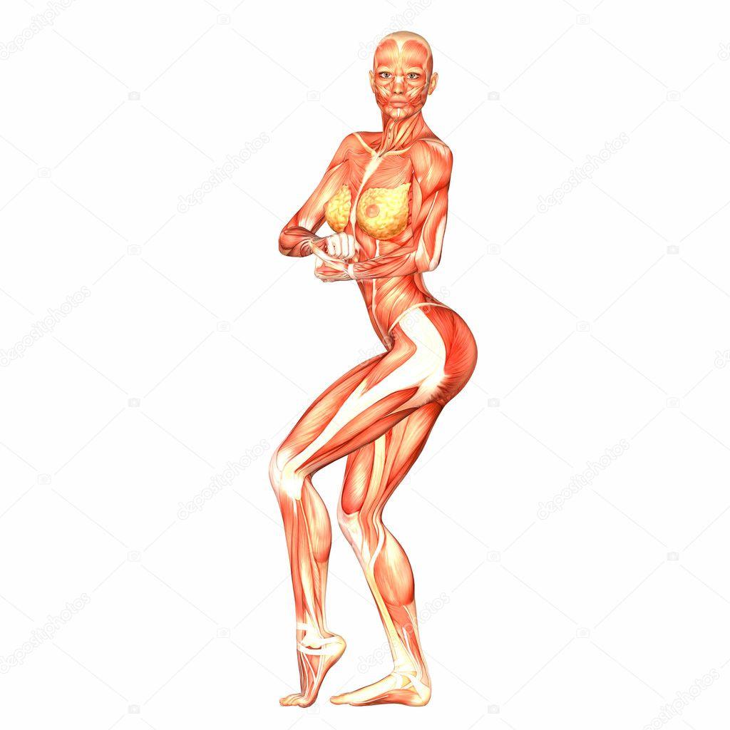 weibliche menschliche Körper-Anatomie — Stockfoto © Chastity #9162339
