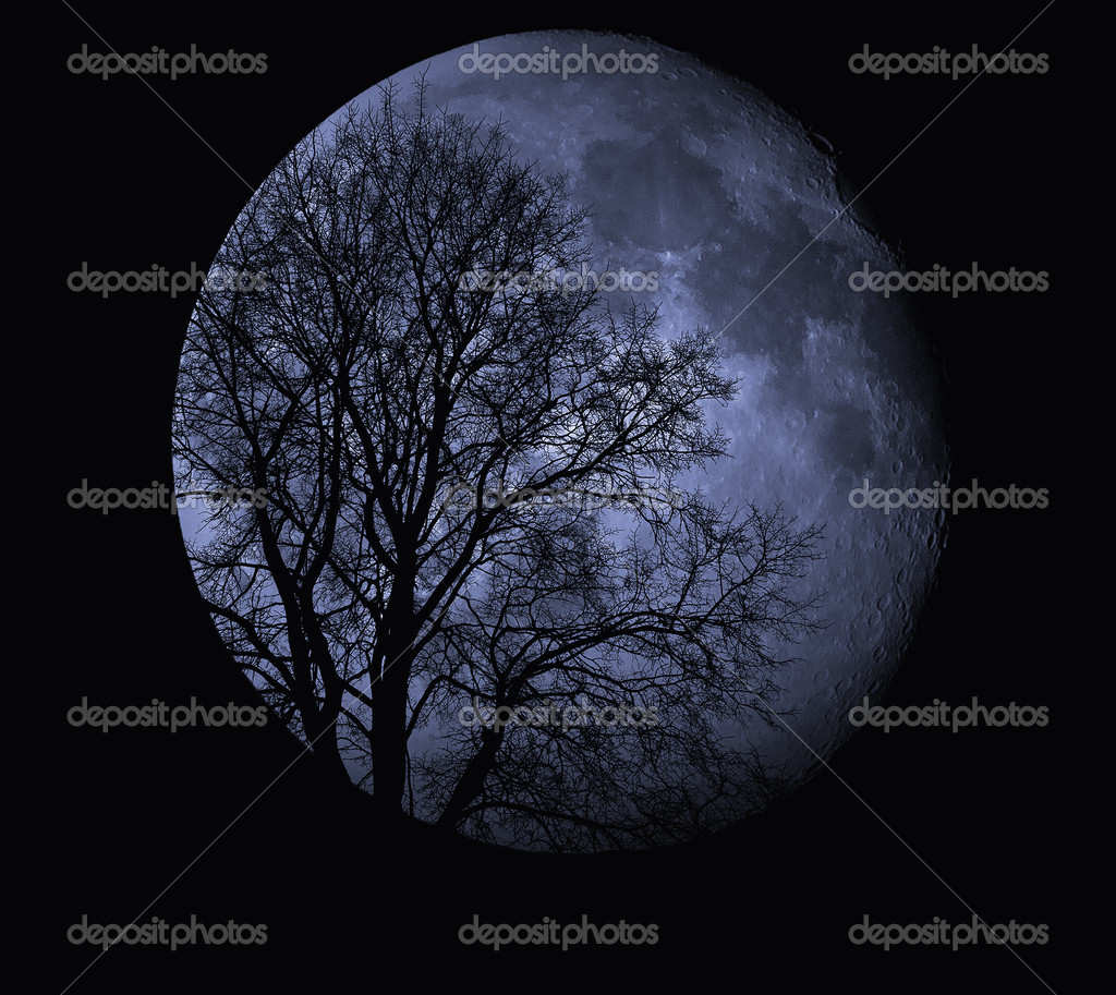 The moon shines through tree branches