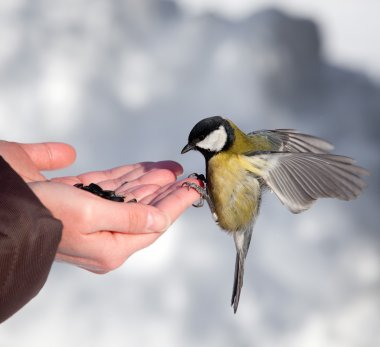 Feeding of birds in the winter