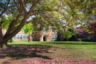 School in spring
