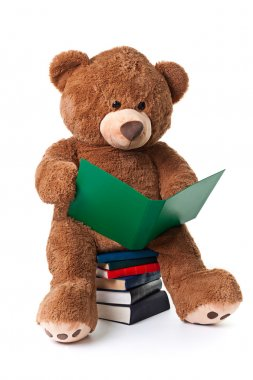 Reading bear with clipping path