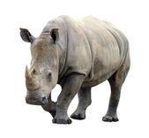 Photo Huge rhino isolated on white background