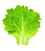 Čerstvý salát / jeden list, izolované na bílém pozadí / close-up