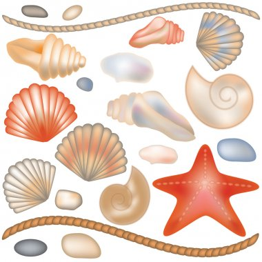 Set seashells and starfish isolated, vector illustration