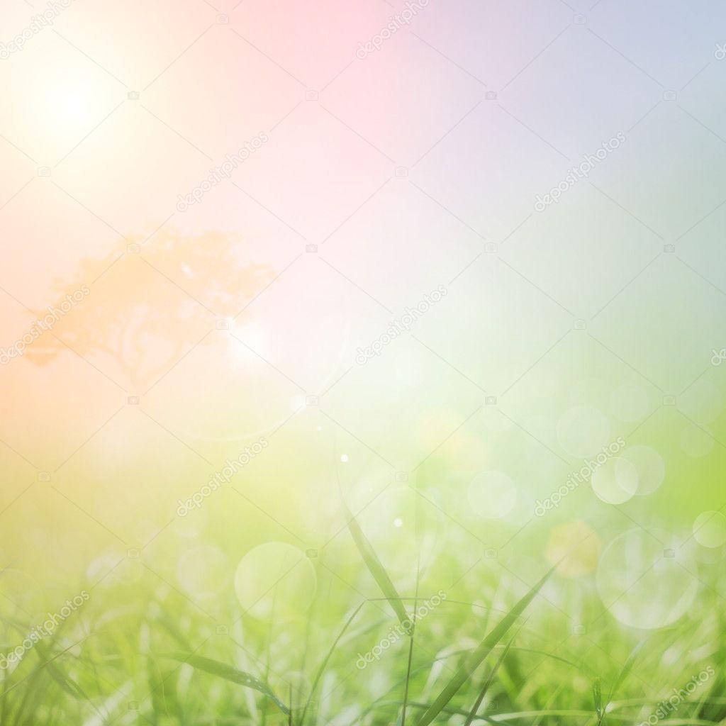 Фотообои Весной или летом природа фоне заката