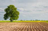 Fotografia paesaggi rurali sono campo arato