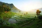 Photo Bali