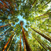 Fotografie stromy