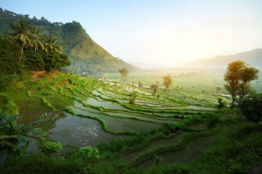 Rice tarrace in mountains. Bali. Indonesia stock vector