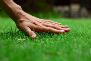 Hand on green lush grass stock vector