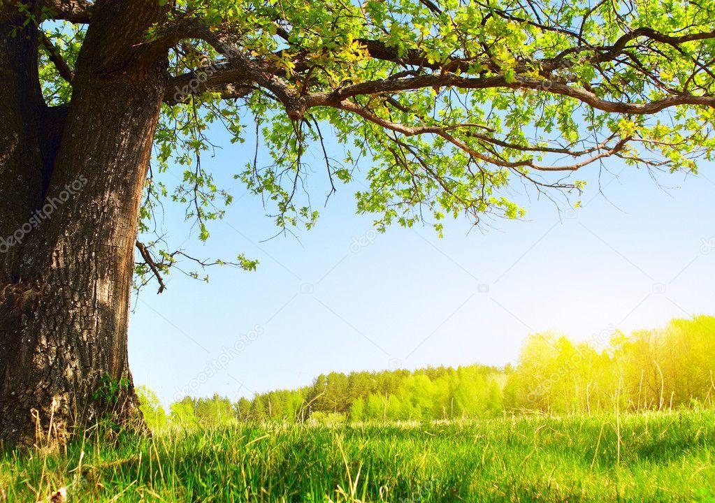 Фотообои Дерево