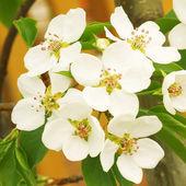 Fotografie Blossoms