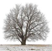 Fotografie strom
