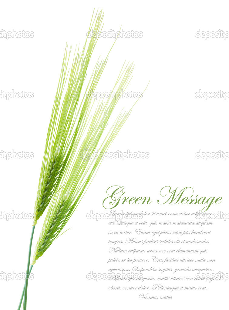 Ears of young green wheat. File contains clipping path for separ