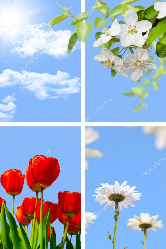 Spring collage: blue sky with sun, blooming apple-tree, tulips a