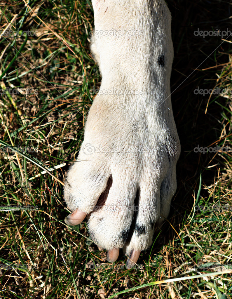 Bump On Dog S Hind Leg