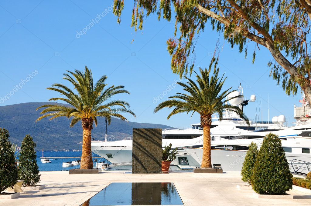 Yachts and palms in the port