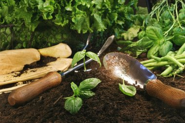 Garden theme with lettuce and herbs