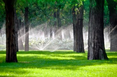 Sprinkler in a lawn with tree