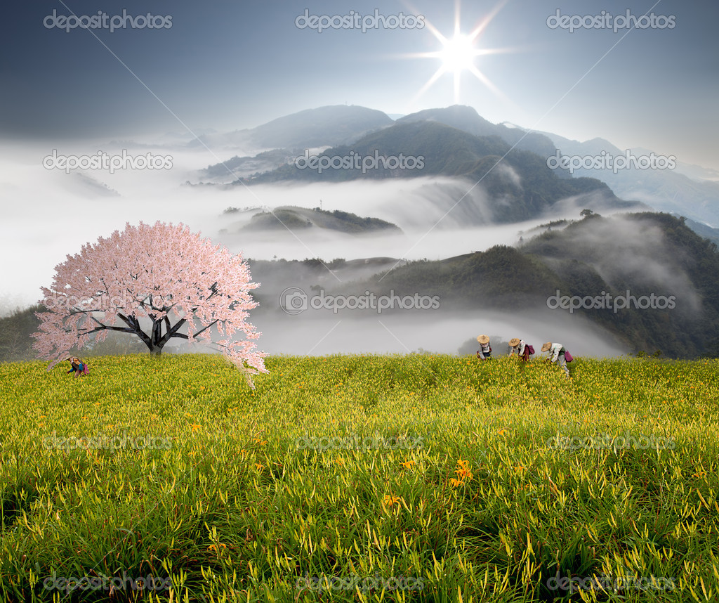 Dramatic clouds with mountain and sakura tree